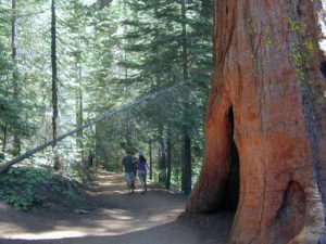 sequoiahot