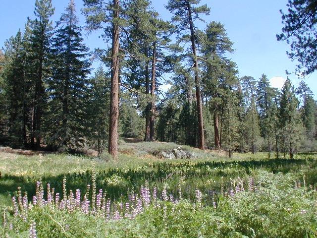 Big Bear Meadows