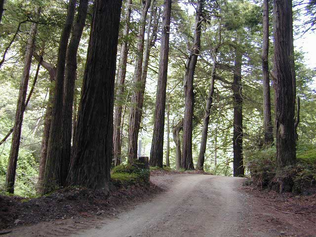 Redwoods Inland