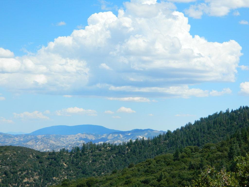 Ozena Views