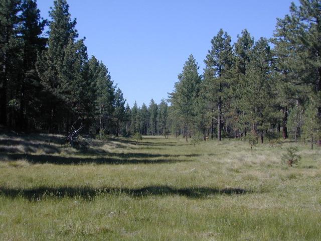 Laguna Meadows