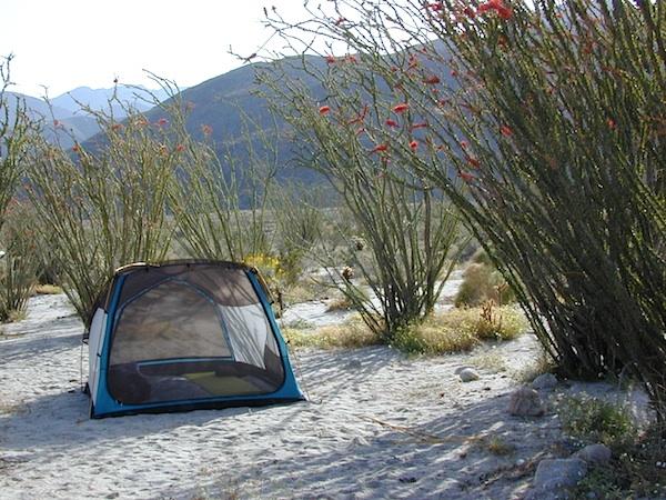 Ocotillo Camping Coyote Wash
