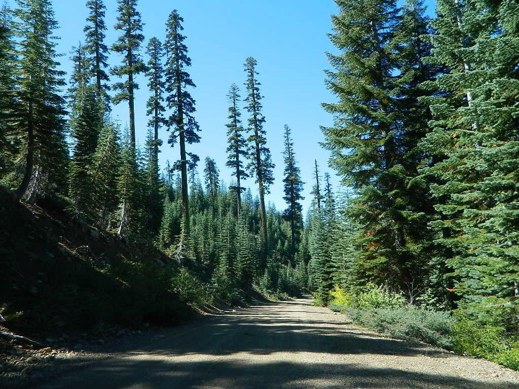 forest roads tahoe