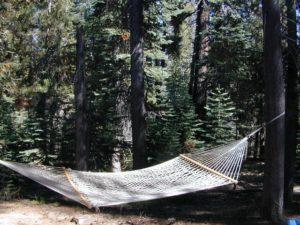 hammock forest