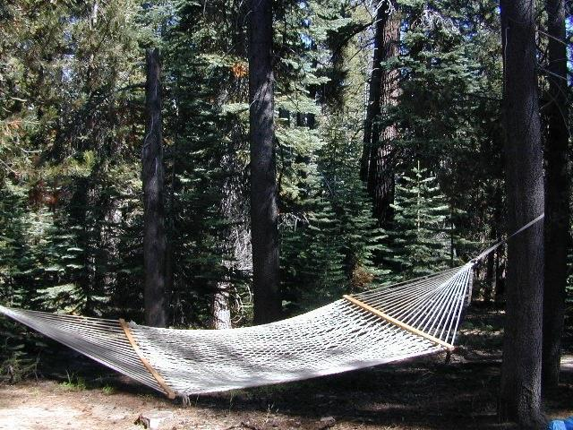 hammock forest
